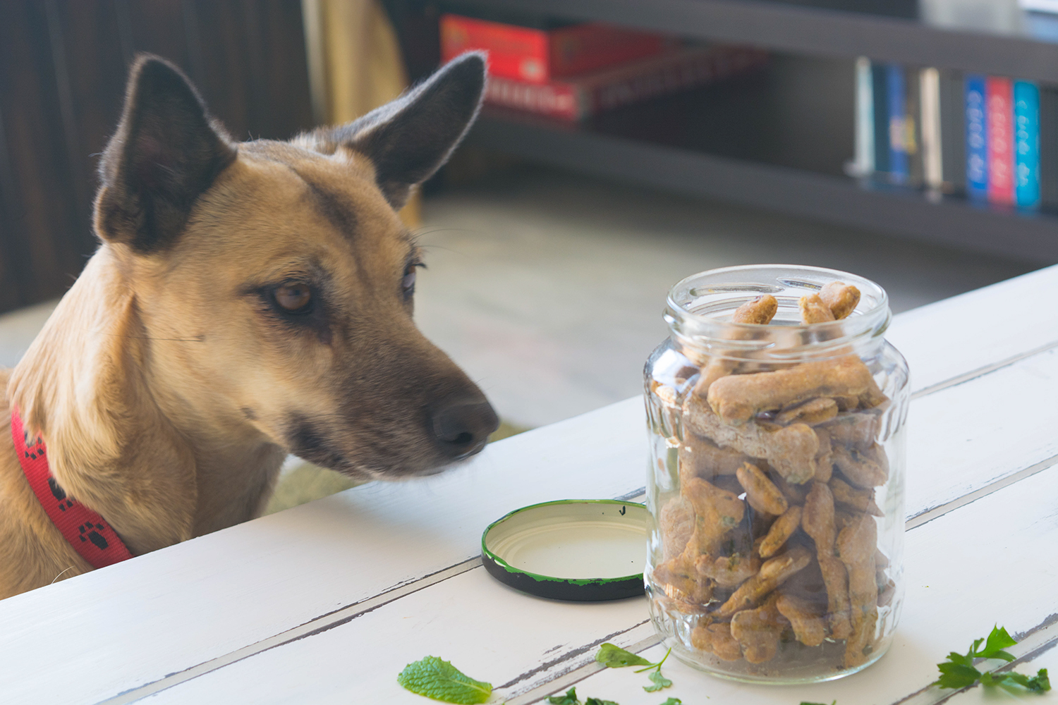 Sweet Potato & Mint Doggie Treats
